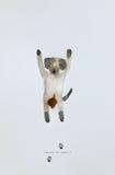 Οι ημέρες σκυλιών έχουν αρχίσει Στοκ Εικόνες