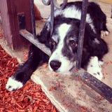 Οι ημέρες σκυλιών του καλοκαιριού Στοκ Εικόνα