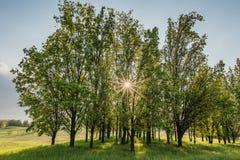 Οι ηλιαχτίδες λάμπουν μέσω των δέντρων την άνοιξη Στοκ φωτογραφία με δικαίωμα ελεύθερης χρήσης