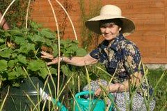 Οι ηλικιωμένες γυναίκες εγκαταστάσεις αγγουριών κήπων ανθίζοντας στις πλησίον Στοκ φωτογραφία με δικαίωμα ελεύθερης χρήσης