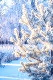 Οι θάμνοι κλάδων τακτοποίησαν στο πάρκο φύσης κλάδων δέντρων έλατου δασών και πεύκων με το χιόνι χειμερινού παγετού hoarfrost Στοκ Φωτογραφίες