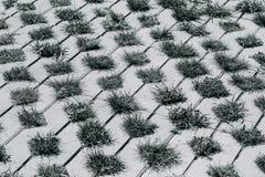 Οι θάμνοι χλόης αυξάνονται από κάτω από τις πλάκες τσιμέντου Πέτρινη πορεία κήπων o ενδιαφέρον υπόβαθρο στοκ φωτογραφίες με δικαίωμα ελεύθερης χρήσης