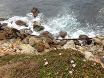 Οι θάλασσα-βράχος-εγκαταστάσεις συνυπάρχουν Στοκ εικόνα με δικαίωμα ελεύθερης χρήσης