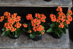 Οι διακοπές πτώσης τα λουλούδια Στοκ Φωτογραφία