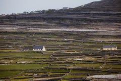 Οι ιρλανδικά φραγές και τα πεδία πετρών αναρριχούνται στο λόφο στα βαλμένα σε στρώσεις πεδία διαίρεσης προτύπων στοκ φωτογραφία με δικαίωμα ελεύθερης χρήσης
