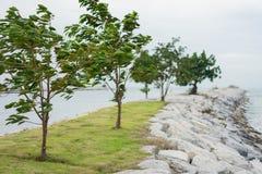 Οι ισχυροί άνεμοι φυσούν τα δέντρα στη θάλασσα στοκ φωτογραφίες με δικαίωμα ελεύθερης χρήσης