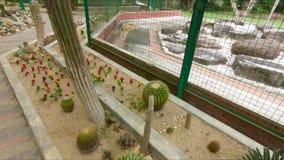 Οι κάκτοι, ζώνη κάκτων σε έναν βοτανικό κήπο Pennang, Μαλαισία φιλμ μικρού μήκους
