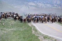 Οι κάουμποϋ wranglers αγροκτημάτων σομπρέρο cowgirls οδηγούν τις εκατοντάδες των αλόγων στο ετήσιο μεγάλο αμερικανικό Drive αλόγω Στοκ Εικόνες