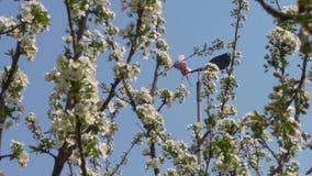 Οι κήποι άνοιξη είναι ανθίζοντας κλάδος με τα λουλούδια απόθεμα βίντεο