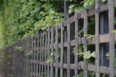 οι κήποι των Βερσαλλιών Στοκ Εικόνες