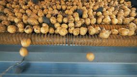 Οι κίτρινες πατάτες που περιστρέφουν σε έναν μεταφορέα τρακτέρ, κλείνουν επάνω φιλμ μικρού μήκους
