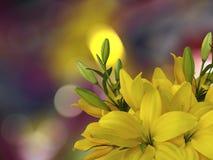Οι κίτρινοι κρίνοι ανθίζουν, στο φωτεινό θολωμένο υπόβαθρο με τα στρογγυλά άσπρα, κίτρινα κυριώτερα σημεία closeup φωτεινή σύνθεσ Στοκ φωτογραφία με δικαίωμα ελεύθερης χρήσης