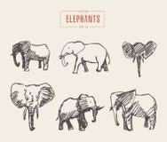 Οι καθορισμένοι ρεαλιστικοί ελέφαντες δίνουν το συρμένο διανυσματικό σκίτσο Στοκ εικόνες με δικαίωμα ελεύθερης χρήσης