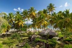 Οι Καραϊβικές Θάλασσες μέσω των φοινίκων Στοκ φωτογραφία με δικαίωμα ελεύθερης χρήσης