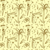 Οι καρποί και οι σπόροι της πικραλίδας, σημύδα, σφένδαμνος και πεύκο Στοκ Φωτογραφίες