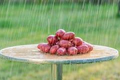 Οι καρποί των πατατών και της θερινής βροχής Στοκ εικόνες με δικαίωμα ελεύθερης χρήσης
