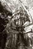 Οι καταστροφές του ναού σύνθετου του TA Prohm στην Καμπότζη Αρχιτεκτονική κληρονομιά της Khmer αυτοκρατορίας Ένα αριστούργημα του στοκ εικόνα