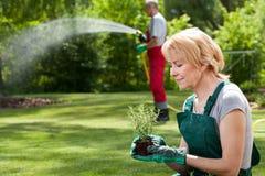 Οι κηπουροί φυτεύουν τα λουλούδια και τη χλόη ποτίσματος Στοκ Εικόνες