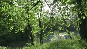 Οι κινήσεις καμερών κατά μήκος της ακτής της πιό επίπεδης λίμνης στη θερινή ηλιόλουστη ημέρα Οι ακτίνες του ήλιου λάμπουν στη κάμ απόθεμα βίντεο