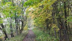 Οι κινήσεις καμερών στο δασικό δρόμο κατά μήκος των δέντρων με το φωτεινό φθινόπωρο φεύγουν απόθεμα βίντεο