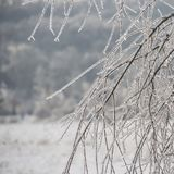 Οι κλάδοι του δέντρου καλύπτονται με τον πάγο χειμώνας εποχής τοπίων ωρών Δέντρα Στοκ Εικόνες