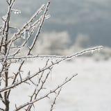 Οι κλάδοι του δέντρου καλύπτονται με τον πάγο χειμώνας εποχής τοπίων ωρών Δέντρα Στοκ φωτογραφία με δικαίωμα ελεύθερης χρήσης