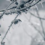 Οι κλάδοι του δέντρου καλύπτονται με τον πάγο χειμώνας εποχής τοπίων ωρών Δέντρα Στοκ Φωτογραφίες