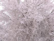Οι κλάδοι του δέντρου καλύπτονται με το hoarfrost στοκ φωτογραφίες