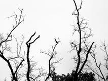 Οι κλάδοι των δέντρων στο δάσος Στοκ Εικόνες