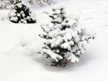 Οι κλάδοι fir-tree καλύπτονται με το χιόνι στοκ εικόνα