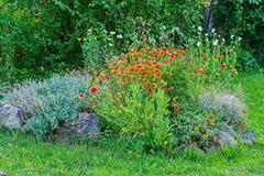 Οι κοκκινωπές ανθοδέσμες και τα chamomile λουλούδια διακοσμούν ένα κρεβάτι λουλουδιών με τις πέτρες σε έναν πράσινο χορτοτάπητα σ Στοκ εικόνες με δικαίωμα ελεύθερης χρήσης