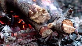Οι κορμοί δέντρων καίνε στο δάσος φιλμ μικρού μήκους