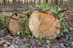 Οι κορμοί με τα φύλλα κόβουν την τοποθέτηση σε ένα δάσος στοκ φωτογραφίες