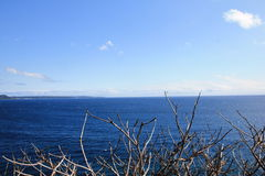 Οι κορμοί της Ταϊβάν Ειρηνικών Ωκεανών Στοκ Εικόνα