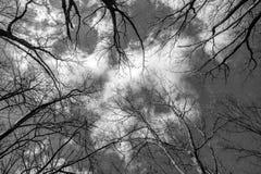Οι κορυφές των δέντρων σε ένα άσπρο υπόβαθρο Στοκ Εικόνα