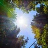 Οι κορυφές των δέντρων στο υπόβαθρο των σαφών ακτίνων ουρανού και ήλιων Στοκ φωτογραφία με δικαίωμα ελεύθερης χρήσης