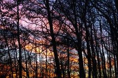 Οι κορδέλλες των χρωμάτων ουρανού κρυφοκοιτάζουν μέσω των δέντρων Στοκ Εικόνες