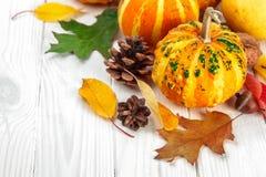 Οι κολοκύθες αποκριών με το pinecone και το φθινόπωρο ξεραίνουν Στοκ Εικόνα