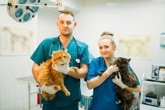 Οι κτηνίατροι θέτουν με τις γάτες, κλινική κτηνιάτρων Στοκ φωτογραφία με δικαίωμα ελεύθερης χρήσης