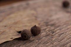 Οι κόκκοι των μαύρων πιπεριών Στοκ φωτογραφίες με δικαίωμα ελεύθερης χρήσης
