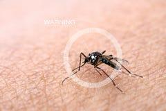 Οι κύκλοι Infographics και τα κουνούπια προειδοποίησης διαδίδονται στο ανθρώπινο δέρμα για να απορροφήσουν το αίμα Άνθρωποι που π Στοκ Εικόνες