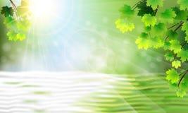 Οι κλάδοι ενός δέντρου, ενός νερού και ενός ήλιου Στοκ Εικόνα