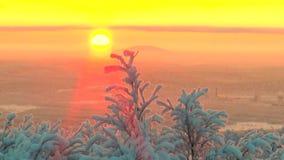 Οι κλάδοι κάλυψαν με τον παγετό την ταλάντευση δέντρων στο υπόβαθρο του ήλιου αύξησης φιλμ μικρού μήκους