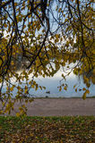 Οι κλάδοι με κίτρινο βγάζουν φύλλα Στοκ φωτογραφία με δικαίωμα ελεύθερης χρήσης