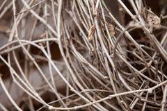 Οι κλάδοι ξεραίνουν πέρυσι & x27 χλόη του s με τα μαραμένα φύλλα Στοκ Εικόνα