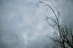 Οι κλάδοι ξεραίνουν το δέντρο στον ουρανό σύννεφων Στοκ Εικόνες