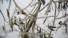 Οι κλάδοι του δέντρου που καλύπτονται με τον πάγο απόθεμα βίντεο