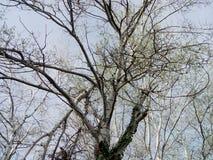 Οι κλάδοι του δέντρου Στοκ Εικόνες