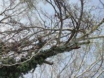 Οι κλάδοι του δέντρου στοκ εικόνα με δικαίωμα ελεύθερης χρήσης
