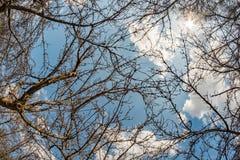 Οι κλάδοι του παλαιού δέντρου μηλιάς Στοκ εικόνα με δικαίωμα ελεύθερης χρήσης